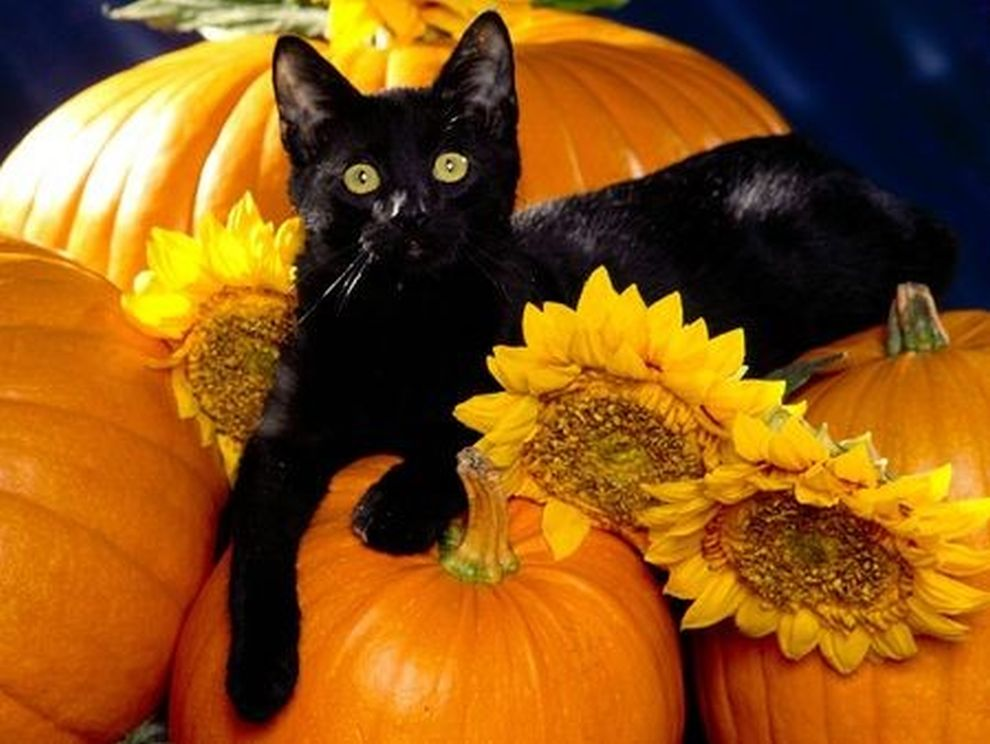 31 Days: Black Cats | News From The Spirit World