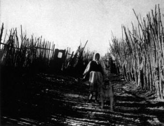Charles noonan photo old woman ghost