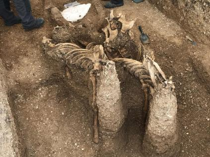 bones of iron age 'vampire' excavated in Yorkshire